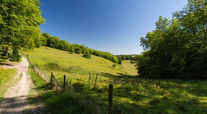 Track leading up towards Wingate Hill at  Reigate Hill and Gatton Park, Surrey.  Part of NT walks around Gatton Park. ©National Trust Images/Matthew Bruce