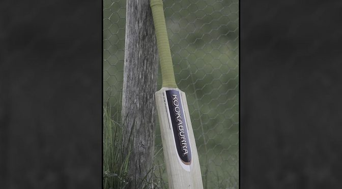 Cricket bat left standing against a tree
