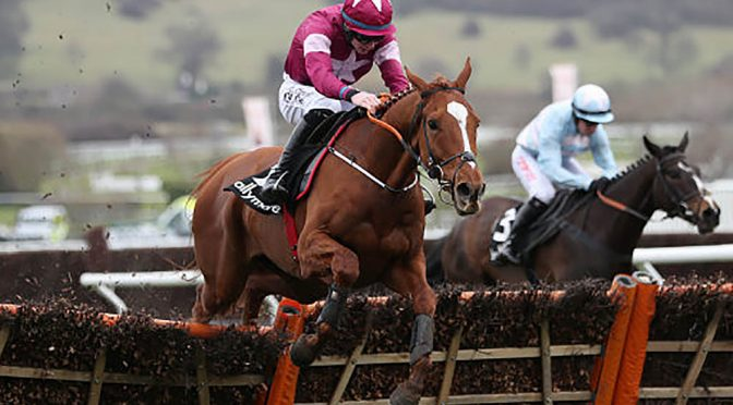 Horse leaping over hurdle during Cheltenham Festival