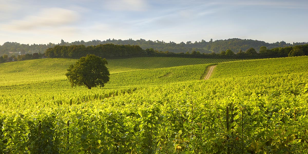 Denbies on sparkling form: Annie Whitmore speaks to CEO Chris White