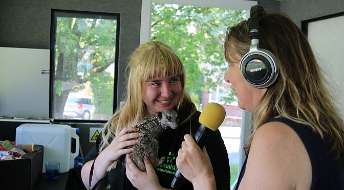 "Chrissy chats with little ""Scout"" …… a Meerkat!  Simples!"