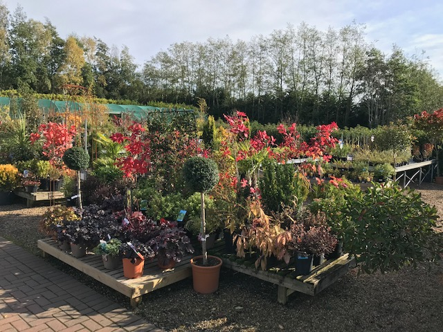 plants in garden centre